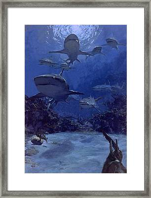 Homing Into The Rookery, Dry Bar, 1975 Framed Print by Stanley Meltzoff / Silverfish Press