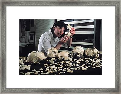 Hominin Skulls From Sima De Los Huesos Framed Print by Javier Trueba/msf