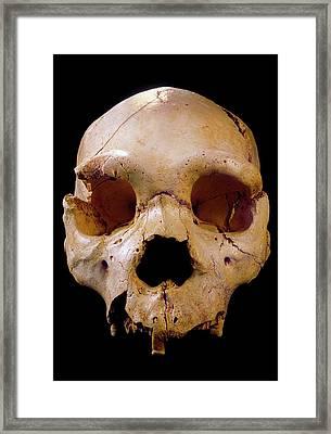 Homo Heidelbergensis Skull (cranium 5) Framed Print