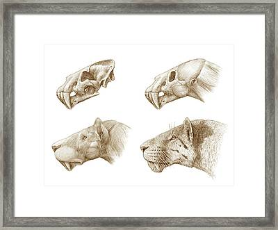 Homotherium Sabre-toothed Cat Framed Print by Mauricio Anton