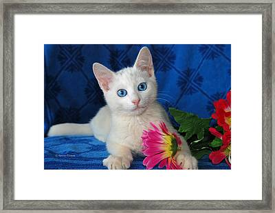Honest I Found It Like This Framed Print by Kenny Francis