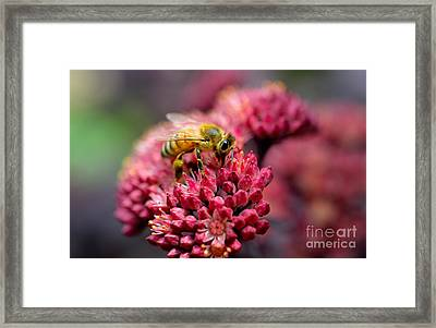 Honey Bee Action Framed Print by Terry Elniski