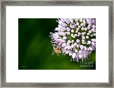 Honey Bee And Lavender Flower Framed Print