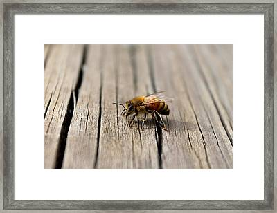 Framed Print featuring the photograph Honey Bee Beauty Shot by Candice Trimble