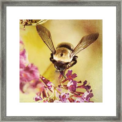 Honey Bee Framed Print by Kim Fearheiley
