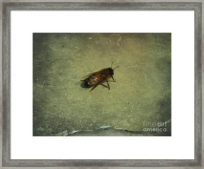 Honey Bee Framed Print by Kristine Nora