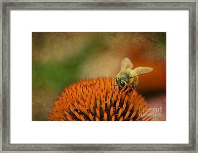 Honey Bee On Flower Framed Print by Dan Friend