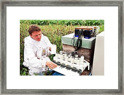 Honey Bee Pesticide Research Framed Print