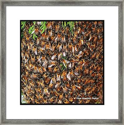 Framed Print featuring the photograph Honey Bee Swarm by Tom Janca