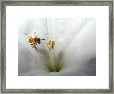 Honey Bee Up Close And Personal Framed Print by Joyce Dickens