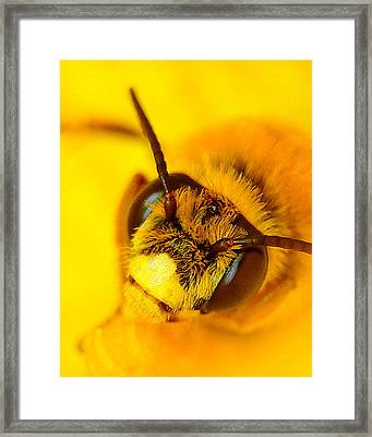Honey Bee Yellow Framed Print by Chris Fraser