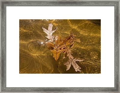 Honey Colored Sun Flares - Oak Leaves Floating In A Fountain Framed Print by Georgia Mizuleva