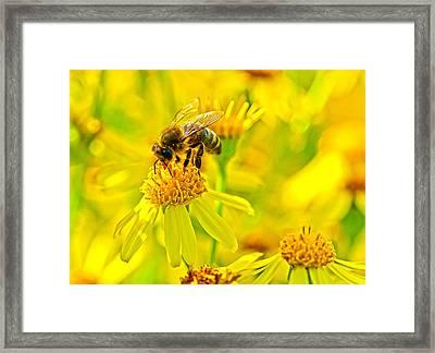 Honey Colours Framed Print