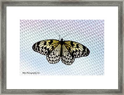 Honeycomb Framed Print by Marty Gayler