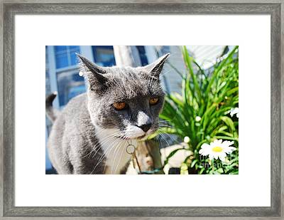Honey Eyes Framed Print by Susan Hernandez