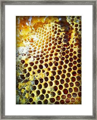 Framed Print featuring the photograph Honey Honey by Kristine Nora