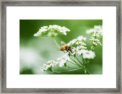 Honey Season Framed Print