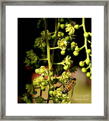 Honeybee Framed Print