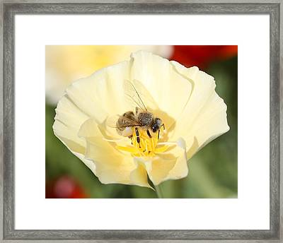 Honeybee On Cream Poppy Framed Print