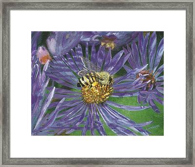 Honeybee On Purple Aster Framed Print by Lucinda V VanVleck