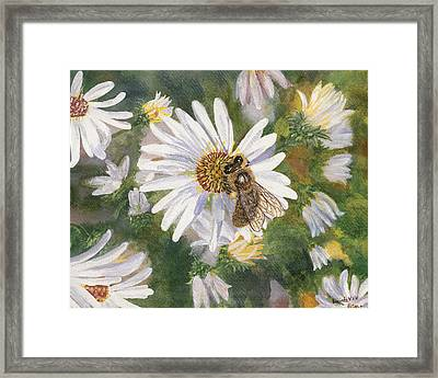 Honeybee On White Aster Framed Print by Lucinda V VanVleck