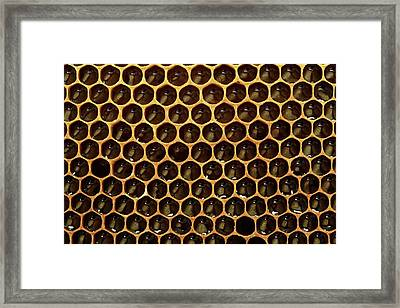 Honeycomb And Honey Framed Print