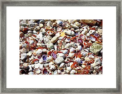 Honeymoon Island Shells - Digital Art Framed Print