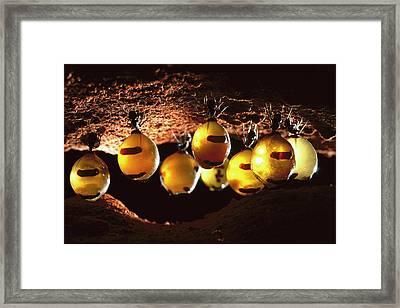 Honeypot Ants Framed Print by Reg Morrison