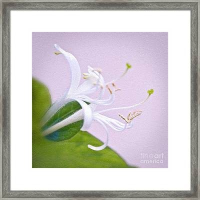 Honeysuckle Framed Print by Delphimages Photo Creations