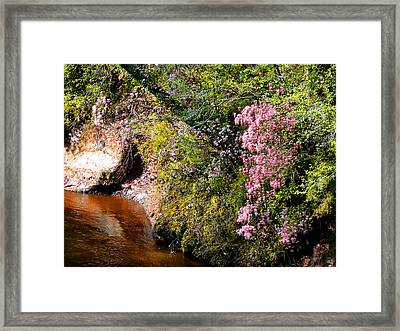 Framed Print featuring the photograph Honeysuckle On Buckatunna Creek by Lanita Williams
