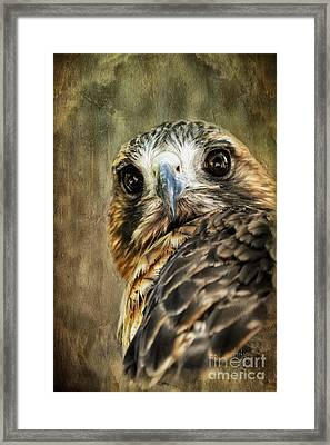Honing In Framed Print by Lois Bryan