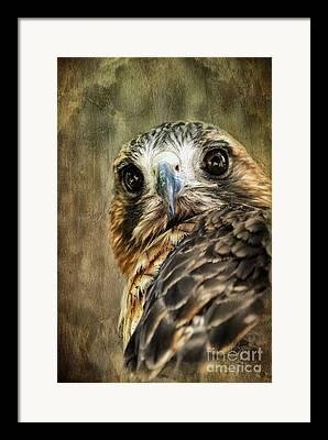 Animal Talk Digital Art Framed Prints