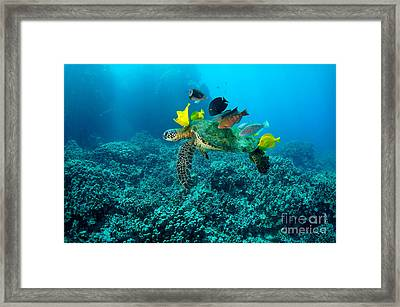 Honu Cleaning Station Framed Print by Aaron Whittemore