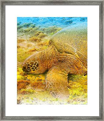 Honu  Sea Turtle Framed Print