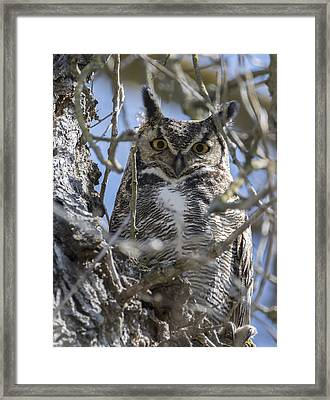Hoo Are You Framed Print by Loree Johnson