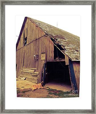Hooch And His Friends Framed Print