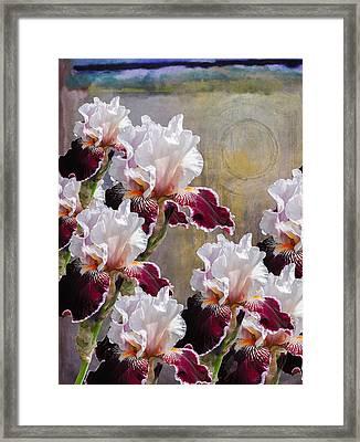 Hood Canal Iris Framed Print by Jeff Burgess