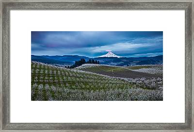 Hood River Orchard Sunrise Framed Print