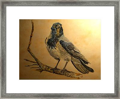Hooded Crow Framed Print by Juan  Bosco