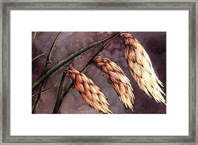 Hooded Lilly Framed Print by John Christopher Bradley