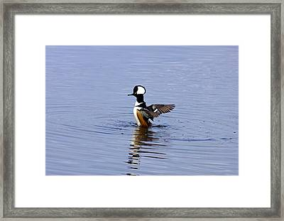 Hooded Merganser Framed Print by Wild Expressions Photography