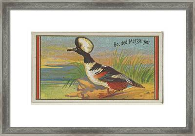 Hooded Morganser, From The Game Birds Framed Print