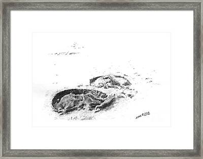 Hoof Prints Framed Print