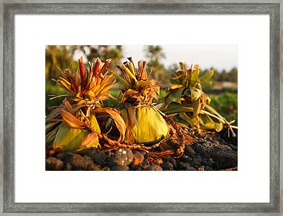 Hookupu At Sunset Framed Print