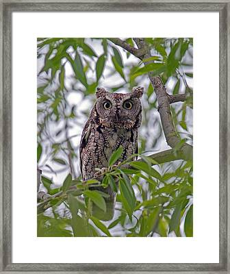 Hooo You Lookin At ? Framed Print