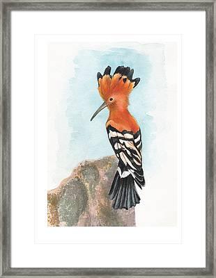 Hoopoe Framed Print