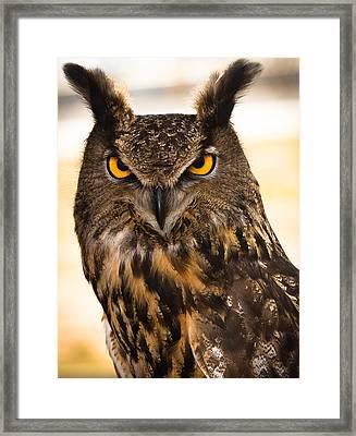 Hoot Framed Print by Annette Hugen