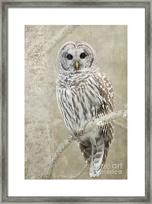 Hoot Hoot Hoot  Framed Print by Beve Brown-Clark Photography