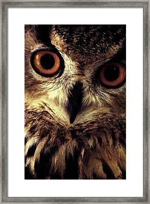 Hoot Owl Framed Print by Alfredo Martinez