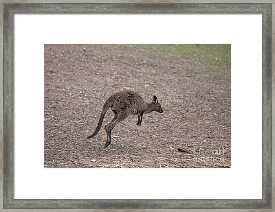 Hop Framed Print by Mike  Dawson